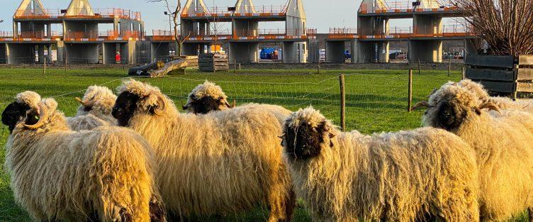 Bouw Rietkraag in Wilgenrijk is gestart